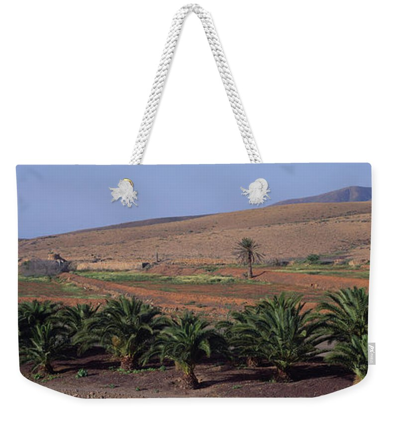 Fan Palm Tree Weekender Tote Bag featuring the photograph Spain, Canary Islands, Lanzarote, Palm by Martial Colomb