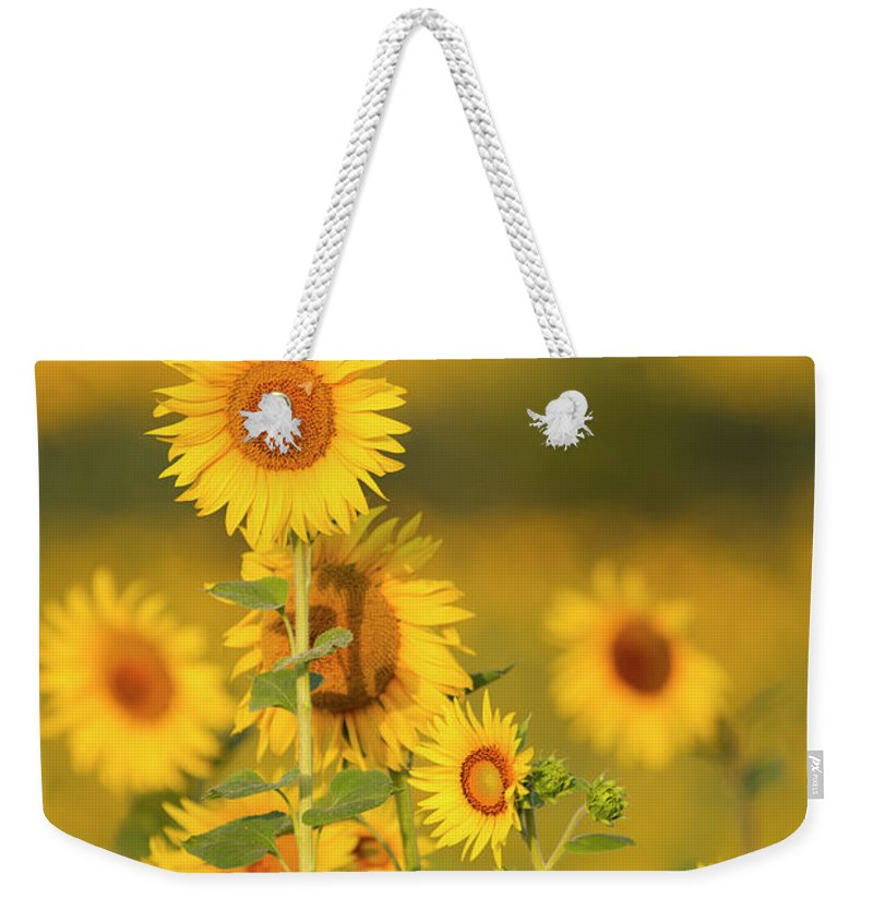 Scenics Weekender Tote Bag featuring the photograph Sunflower Fields In Tuscany,italy by Chris Cole
