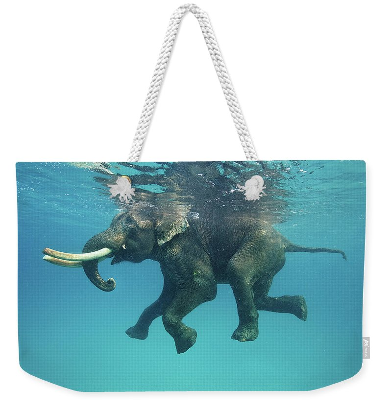 Underwater Weekender Tote Bag featuring the photograph Swimming Elephant by Mike Korostelev Www.mkorostelev.com
