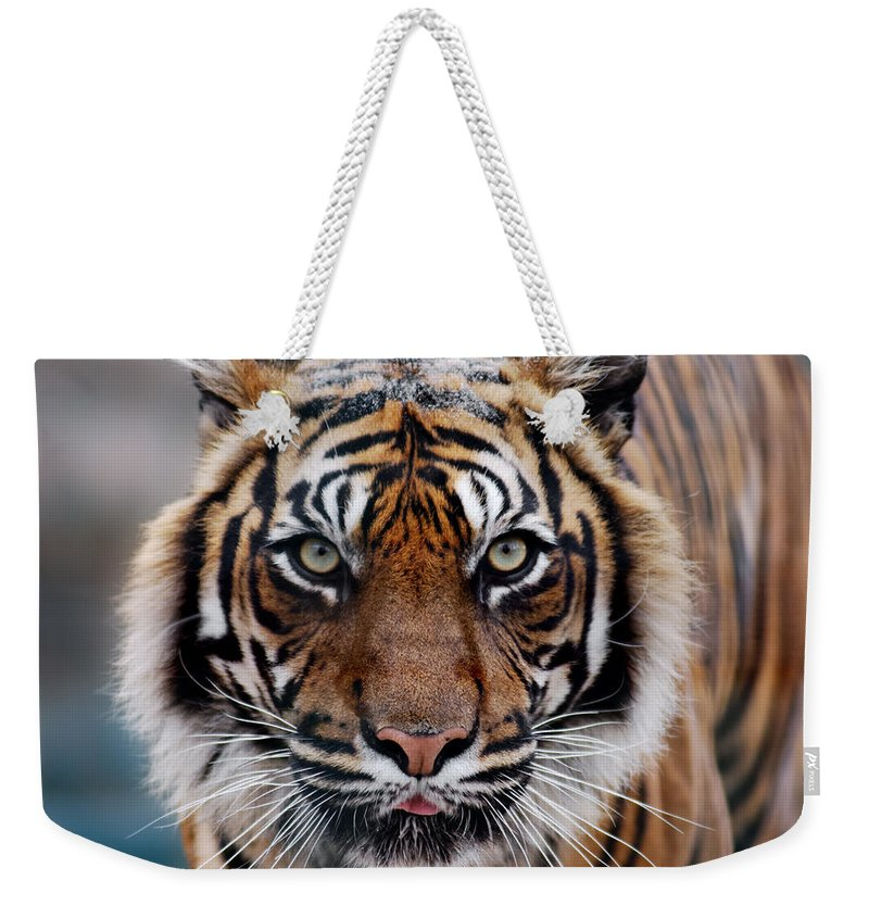 Snow Weekender Tote Bag featuring the photograph Tiger by Freder