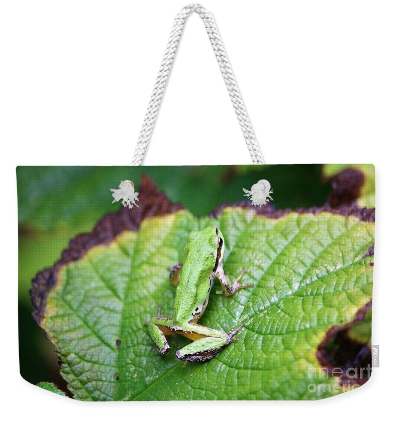 Tree Frog Weekender Tote Bag featuring the digital art Tree Frog On Leaf by Nick Gustafson