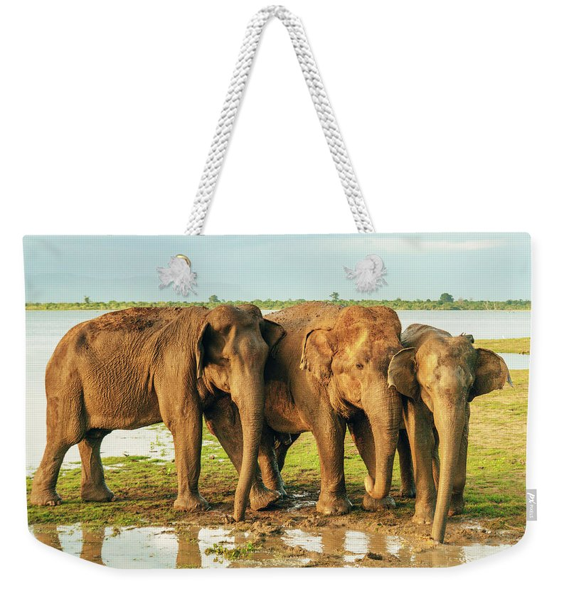 Elephant Weekender Tote Bag featuring the photograph Elephants - Three Best Friends 2 by Max Blumenthal