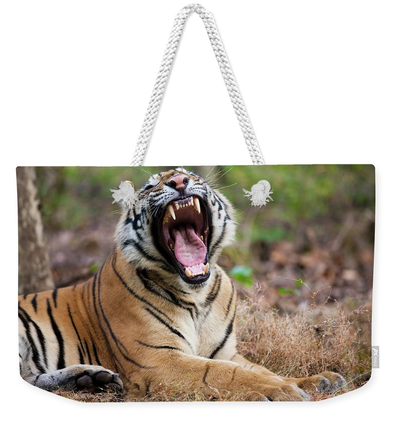 Snarling Weekender Tote Bag featuring the photograph An Adult Tiger In Bandhavgarh National by Mint Images - Art Wolfe