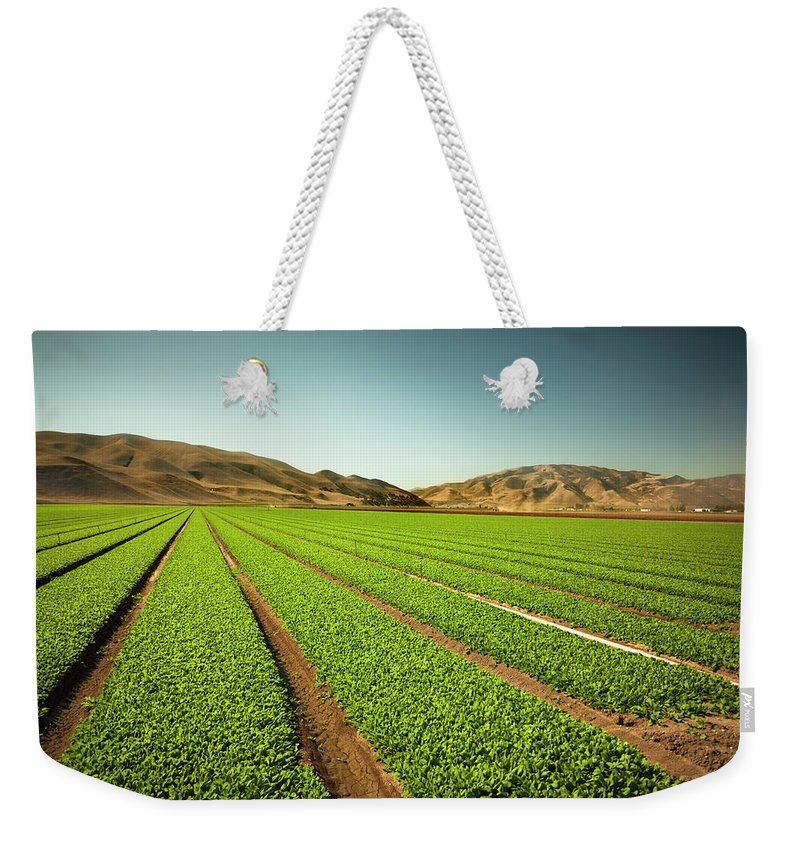 Environmental Conservation Weekender Tote Bag featuring the photograph Crops Grow On Fertile Farm Land by Pgiam