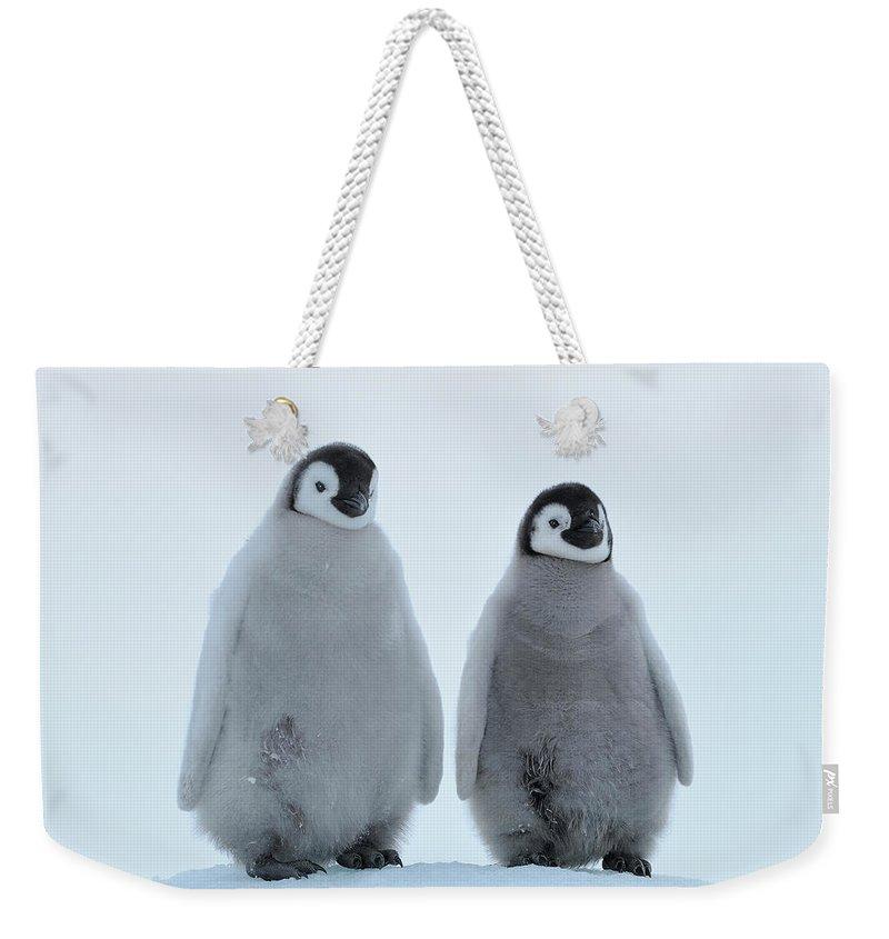 Emperor Penguin Weekender Tote Bag featuring the photograph Emperor Penguin by Raimund Linke