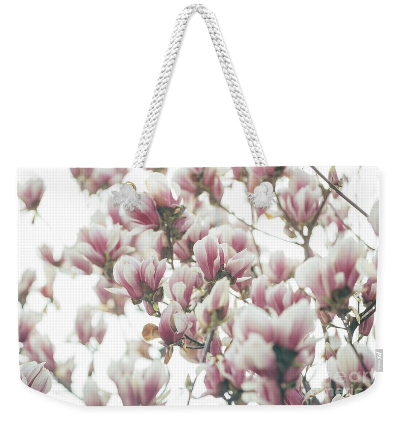 Magnolia Weekender Tote Bag featuring the photograph Magnolia Tree by Jelena Jovanovic