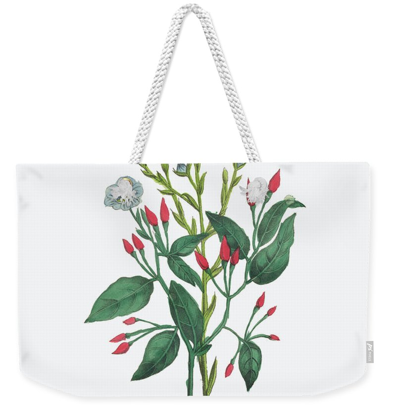 White Background Weekender Tote Bag featuring the digital art Victorian Botanical Illustration Of by Bauhaus1000