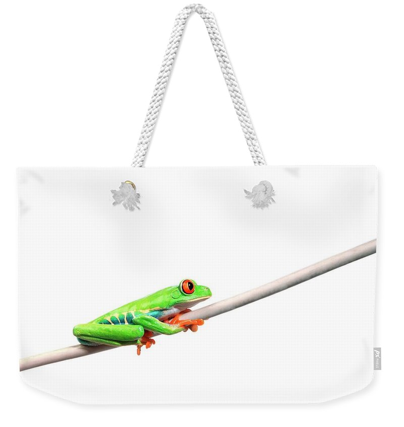 Rope Weekender Tote Bag featuring the photograph A Frog Hanging On by Design Pics/corey Hochachka
