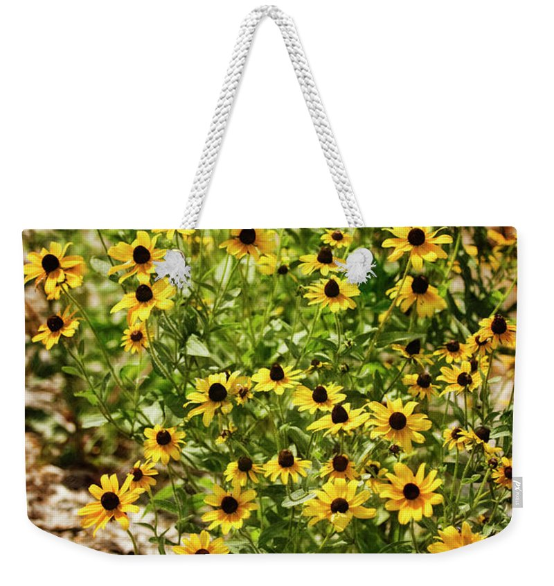 Rockville Weekender Tote Bag featuring the photograph A Group Of Bossoming Black-eyed Susans by Maria Mosolova