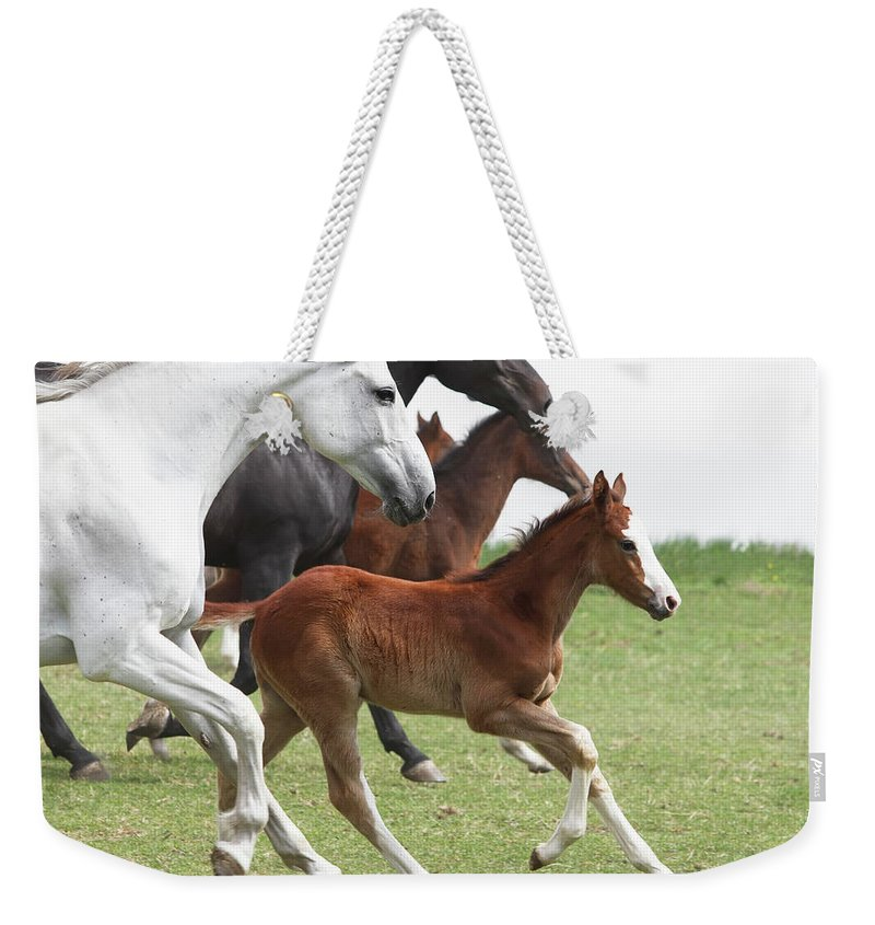 Horse Weekender Tote Bag featuring the photograph A Group Of Galloping Horses In An Open by Somogyvari