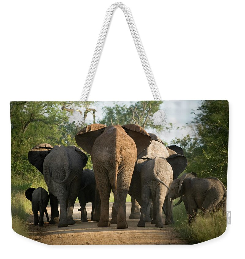 Cow Weekender Tote Bag featuring the photograph A Herd Of Elephants Heading Away From Us by Jono0001
