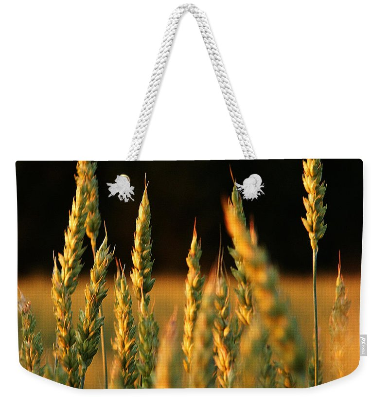 Bakery Weekender Tote Bag featuring the photograph A Wheat Field Towards The End Of The Day by Ssuni