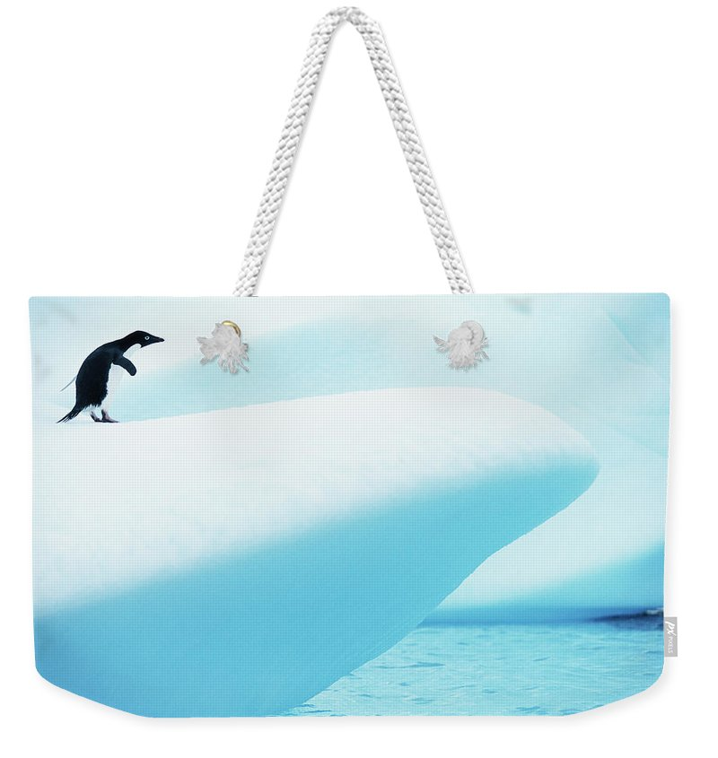 The End Weekender Tote Bag featuring the photograph Adelie Penguin Pygoscelis Adeliae by Paul Souders