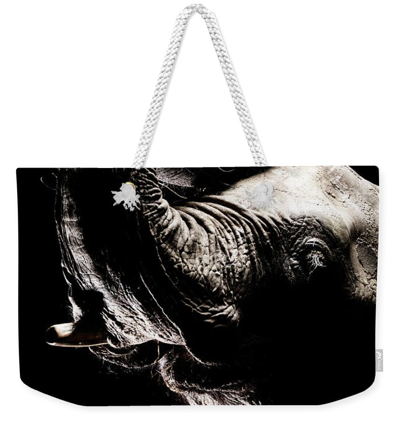 Animal Trunk Weekender Tote Bag featuring the photograph African Elephant With The Trunk Raised by Henrik Sorensen