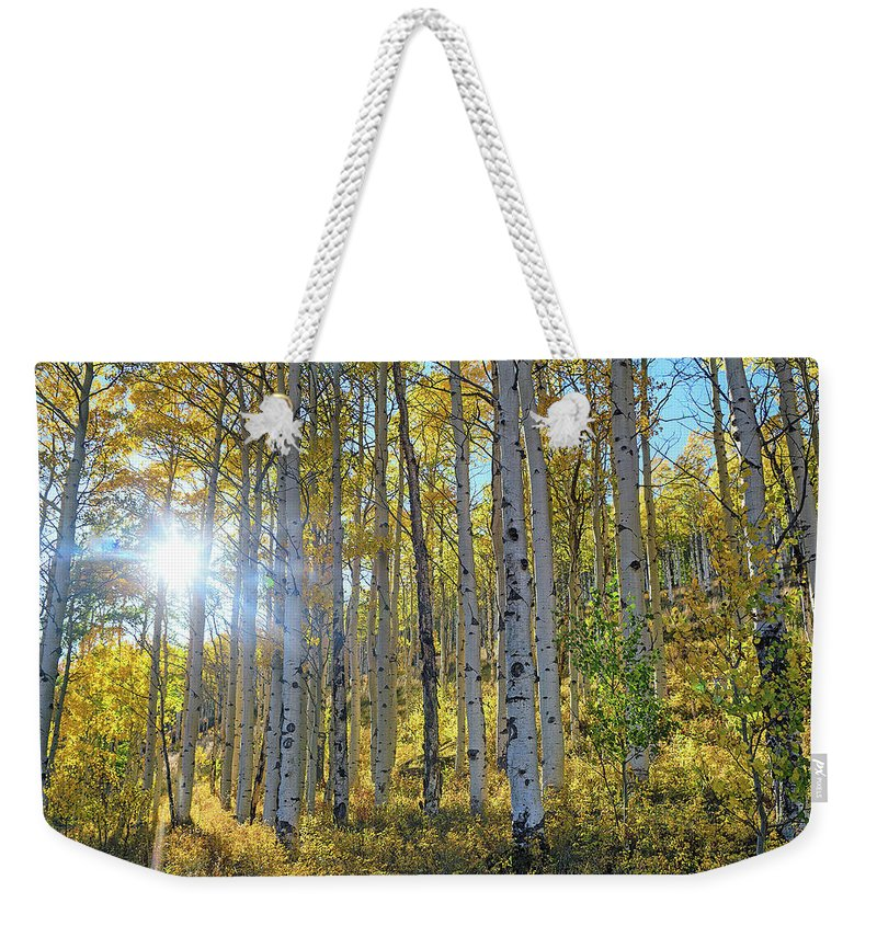 Aspens Weekender Tote Bag featuring the photograph Afternoon Aspens by Brian Kerls