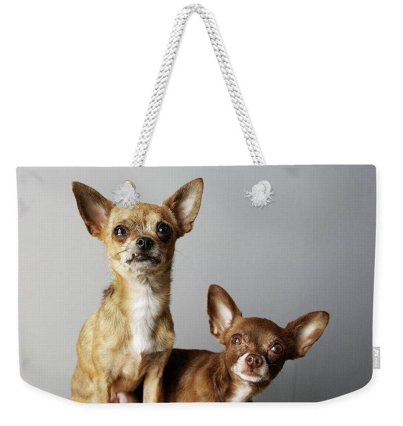 Animal Themes Weekender Tote Bag featuring the photograph All Dog, No Cat by Laura Layera