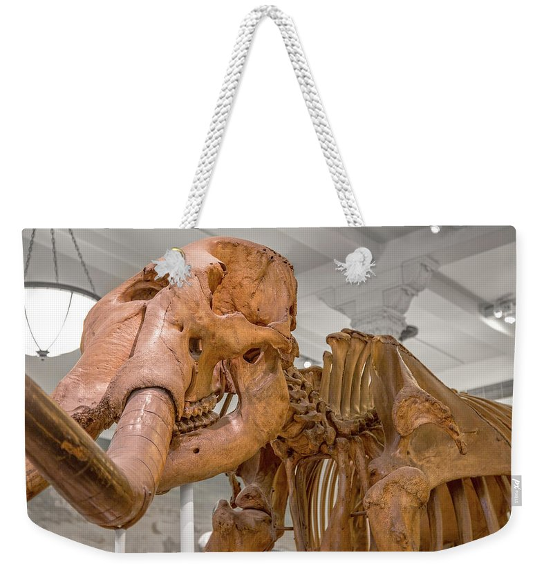 Wooly Weekender Tote Bag featuring the photograph An Enormous Guy by Betsy Knapp