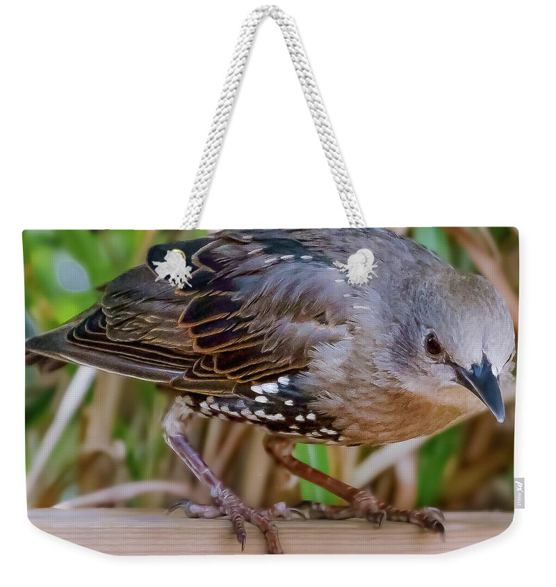Bird Weekender Tote Bag featuring the photograph Angry Bird by Joel Friedman