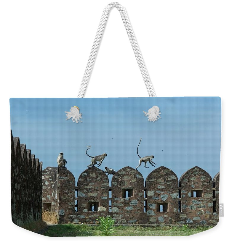 Clear Sky Weekender Tote Bag featuring the photograph Apes Playing At Kumbhalgarh by Dominik Eckelt