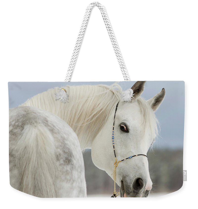 Horse Weekender Tote Bag featuring the photograph Arabian Stallion by Photographs By Maria Itina
