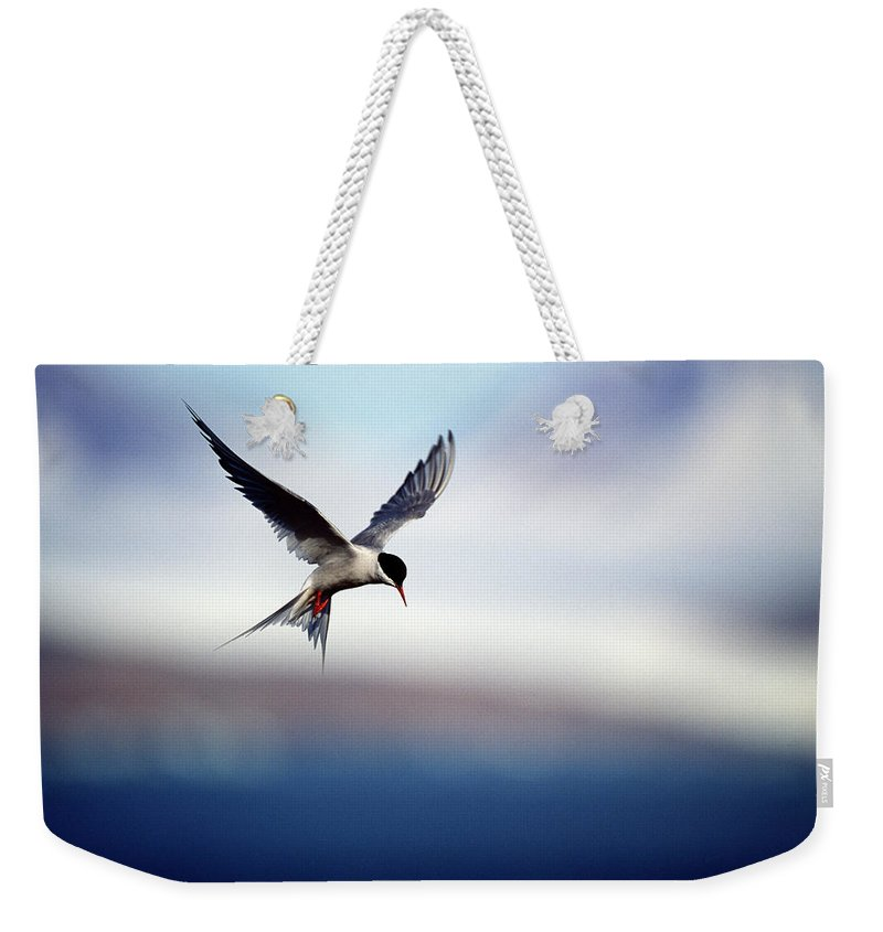 Svalbard Islands Weekender Tote Bag featuring the photograph Arctic Tern Hovering by Mike Hill