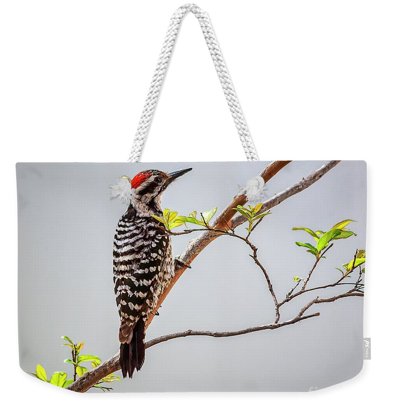 Woodpecker Weekender Tote Bag featuring the photograph Arizona Ladderback Woodpecker by Janice Pariza