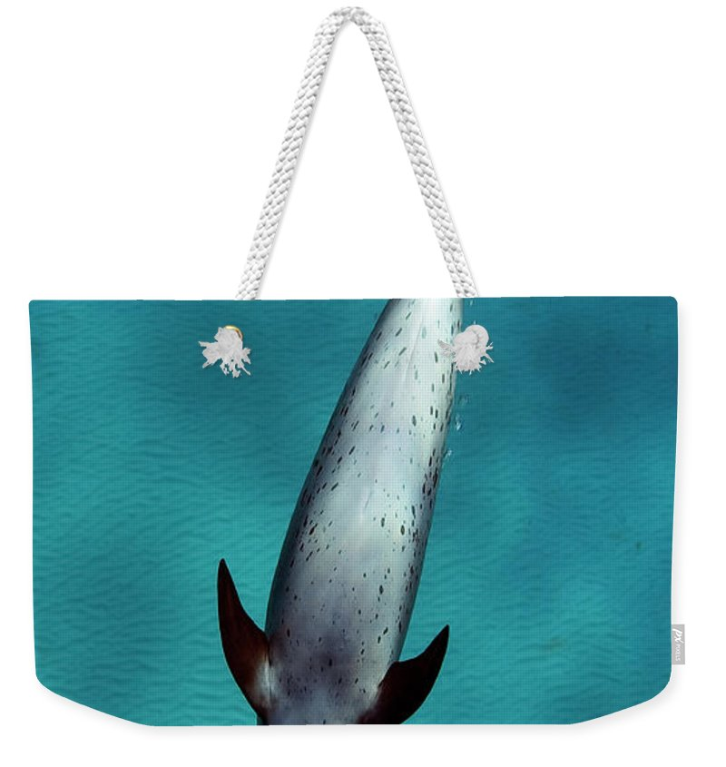 Animal Themes Weekender Tote Bag featuring the photograph Atlantic Spotted Dolphin by Todd Mintz Www.tmintz.ca