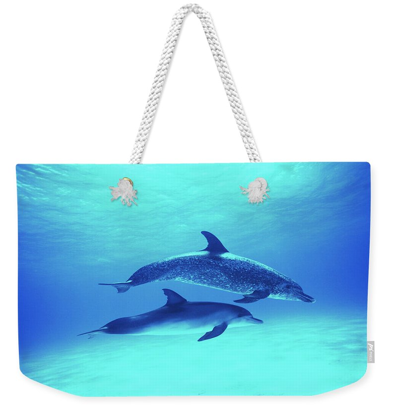 Underwater Weekender Tote Bag featuring the photograph Atlantic Spotted Dolphins Stenella by Rene Frederick