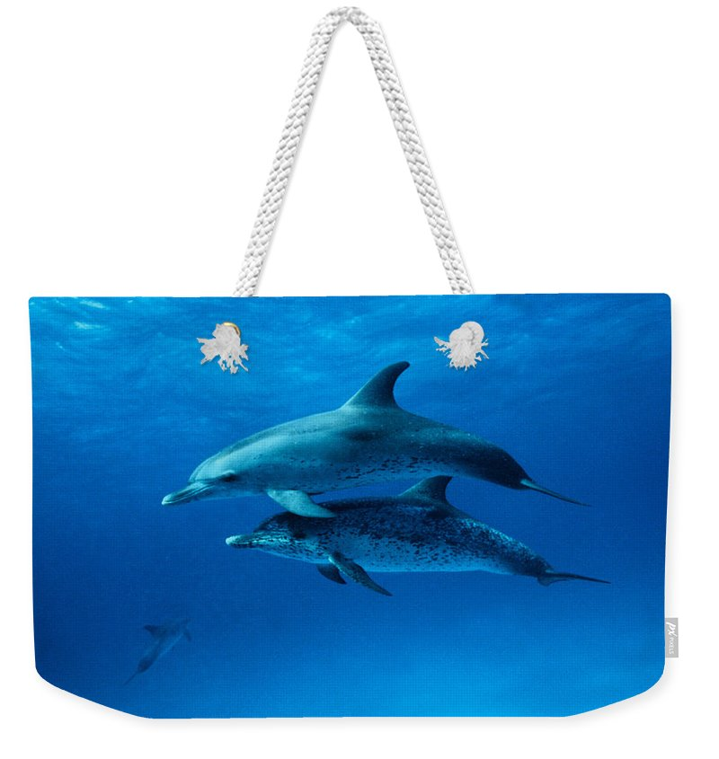 Color Image Weekender Tote Bag featuring the photograph Atlantic Spotted Dolphins,stenella by Gerard Soury