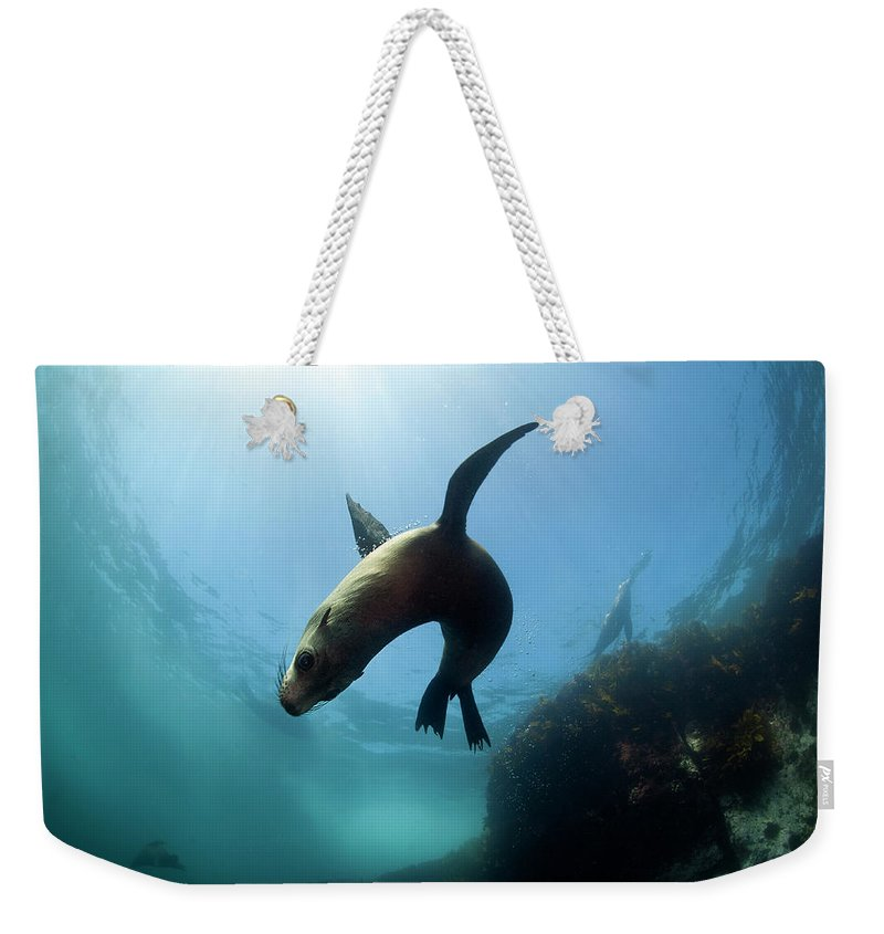 Underwater Weekender Tote Bag featuring the photograph Australian Fur Seal With Sun Burst by Alastair Pollock Photography