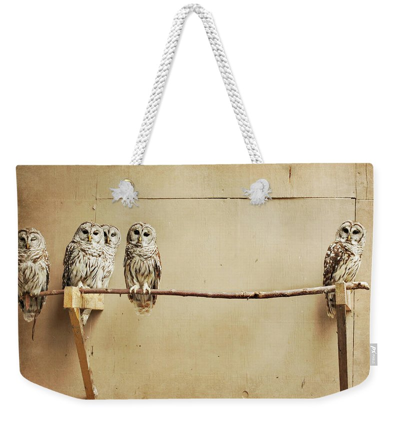 Scranton Weekender Tote Bag featuring the photograph Baby Barred Owls by Tara Reifenheiser