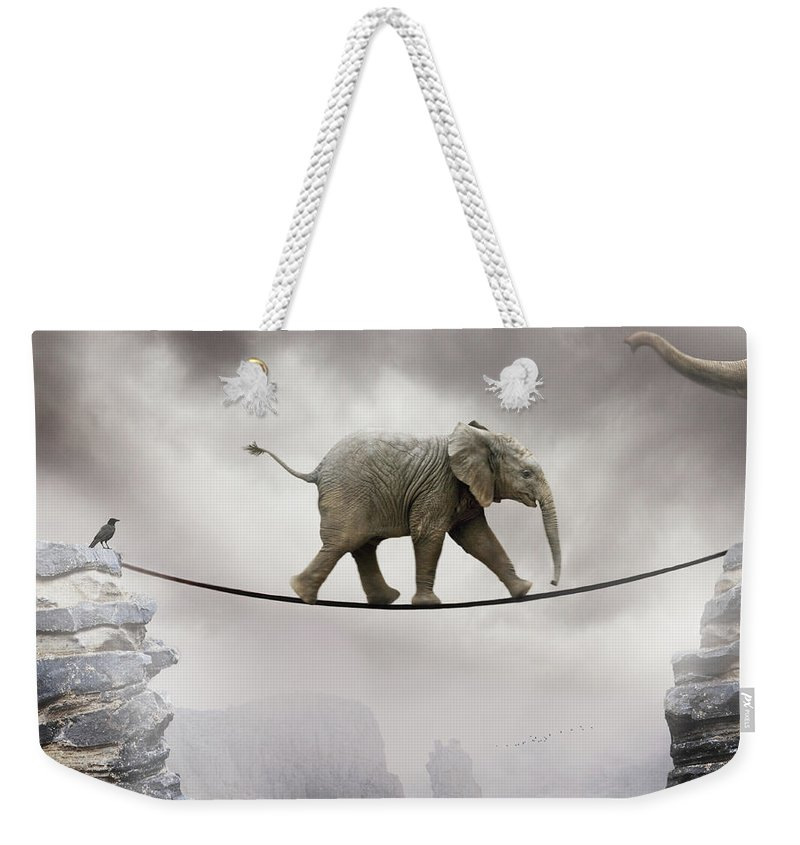 Animal Themes Weekender Tote Bag featuring the photograph Baby Elephant by By Sigi Kolbe