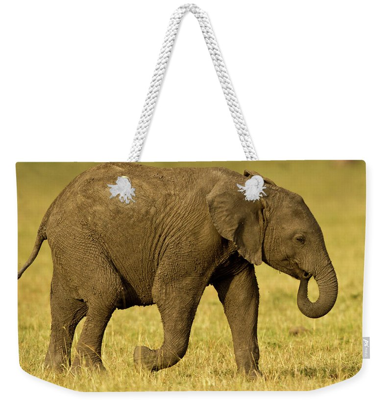 Following Weekender Tote Bag featuring the photograph Baby Elephant Following The Herd On The by Manoj Shah
