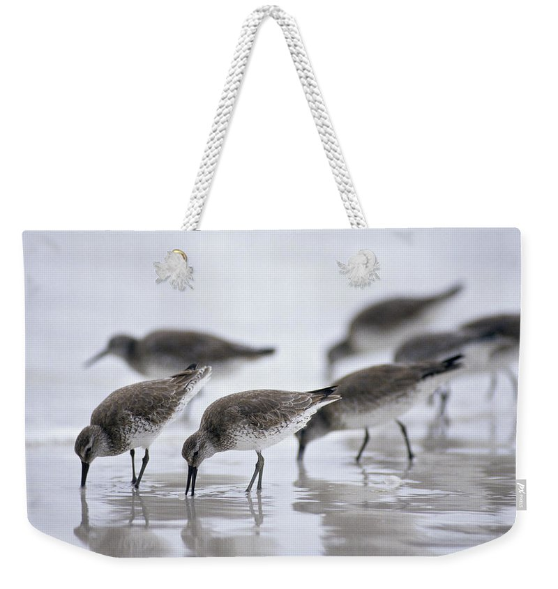 Water's Edge Weekender Tote Bag featuring the photograph Bairds Sandpipers, Calidris Bairdii by Ed Reschke