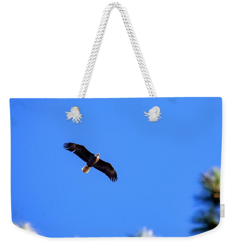 Lake Cuyamaca Weekender Tote Bag featuring the photograph Bald Eagle In Lake Cuyamaca by Anthony Jones