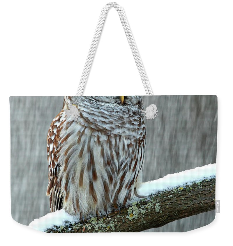 Alertness Weekender Tote Bag featuring the photograph Barred Owl In The Snow by Alex Thomson Photography