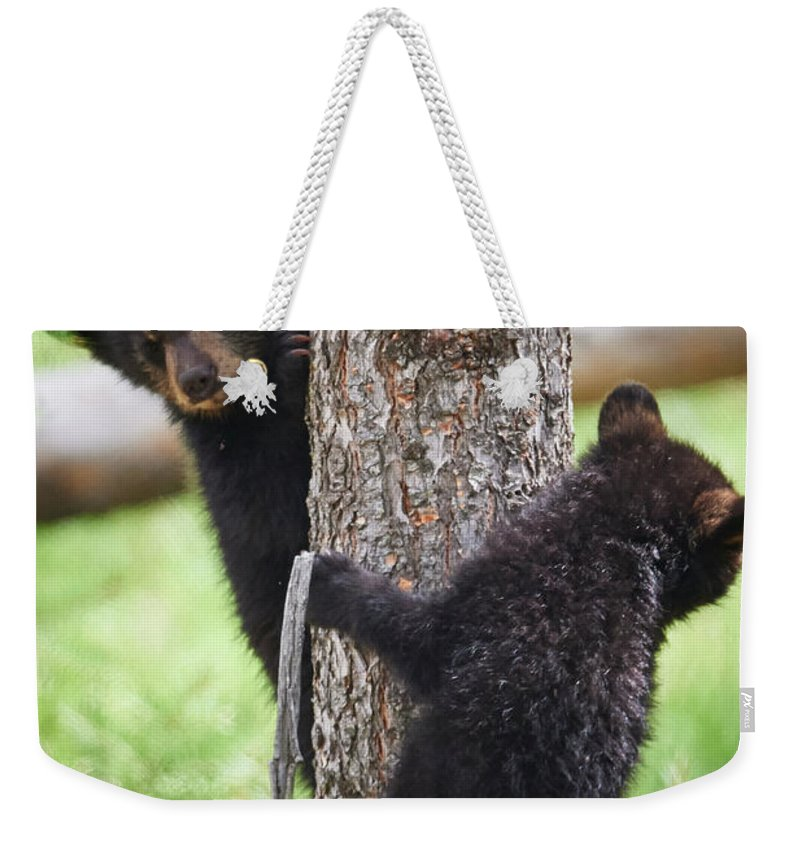 Black Bear Weekender Tote Bag featuring the photograph Bear Cubs In A Tree by Paul Freidlund