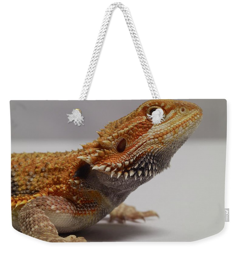 Alertness Weekender Tote Bag featuring the photograph Bearded Dragon by Dan Burn-forti