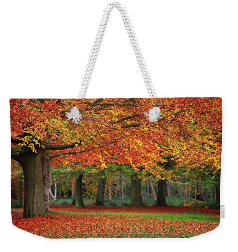 Orange Color Weekender Tote Bag featuring the photograph Beautiful Autumn In Park by Lorado