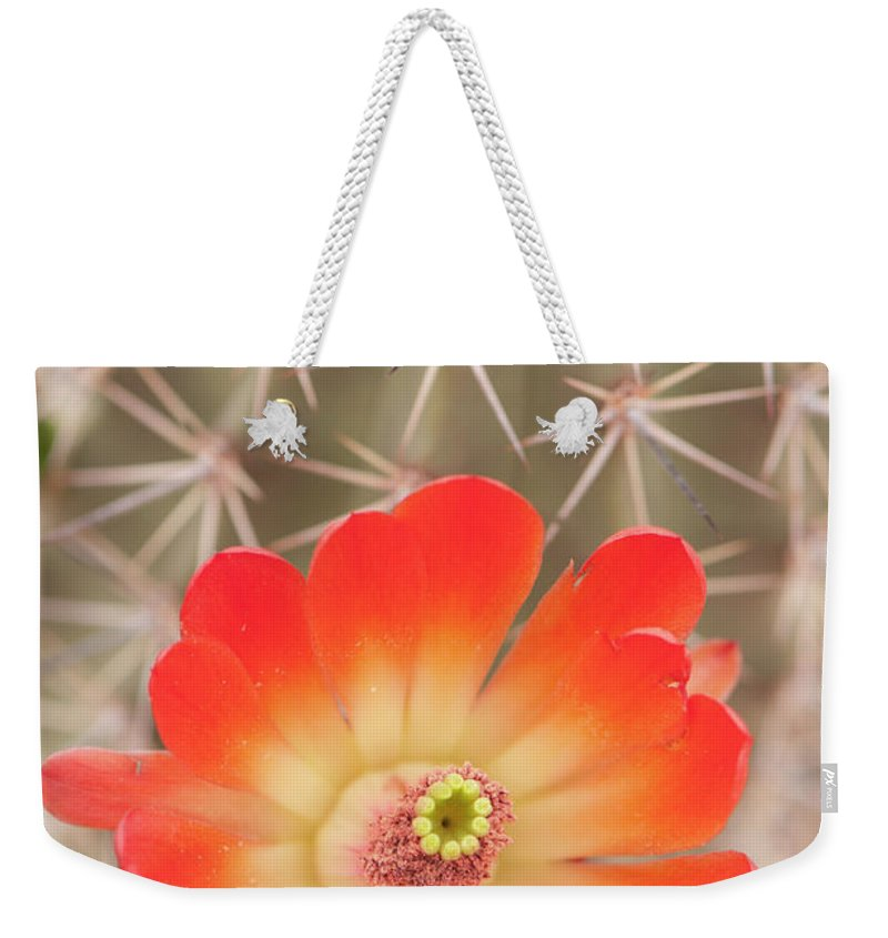 Orange Color Weekender Tote Bag featuring the photograph Beautiful Claret Cup Hedgehog Blossoms by Lokibaho
