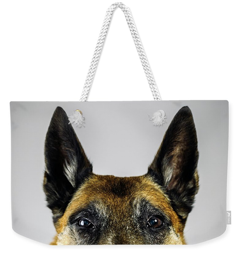 Pets Weekender Tote Bag featuring the photograph Belgian Sheperd Malinois Dog Looking At by Joan Vicent Cantó Roig