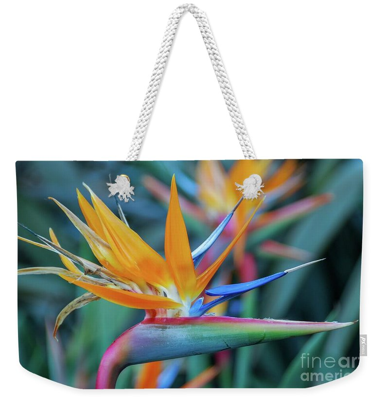 Flowers Weekender Tote Bag featuring the photograph Bird Of Paradise Flowers by D Davila