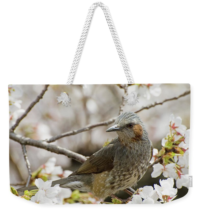 Alertness Weekender Tote Bag featuring the photograph Bird Perched Among Cherry Blossoms by Philippe Widling / Design Pics
