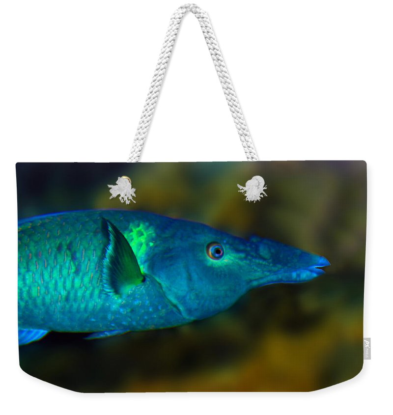 Bird Wrasse Weekender Tote Bag featuring the photograph Bird Wrasse by Anthony Jones