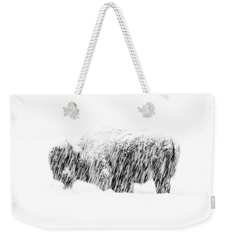American Bison Weekender Tote Bag featuring the photograph Bison In Painted Snow by Max Waugh