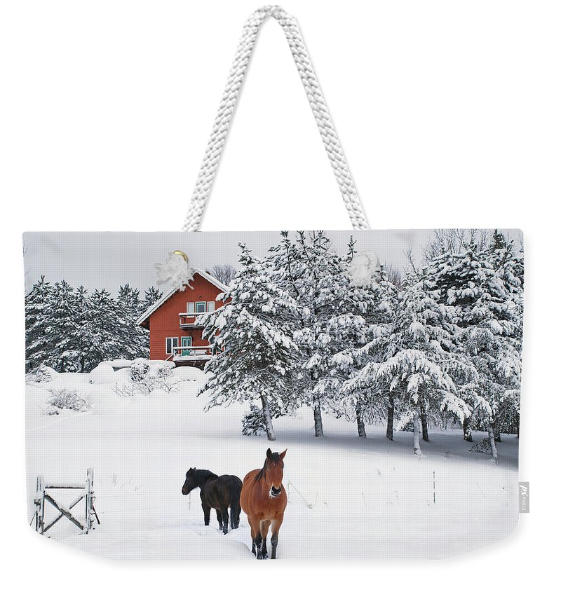 Horse Weekender Tote Bag featuring the photograph Black And Brown Horse by Anne Louise Macdonald Of Hug A Horse Farm