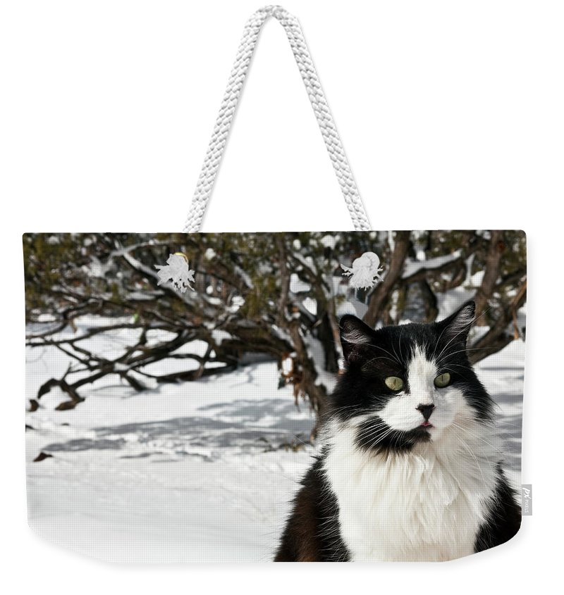 Alertness Weekender Tote Bag featuring the photograph Black And White Cat Sitting In The Snow by Marilyn Conway