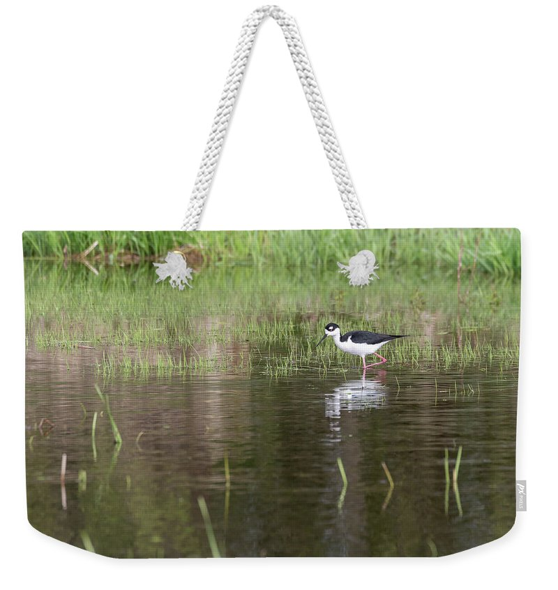 Black-necked Stilt (himantopus Mexicanus) Weekender Tote Bag featuring the photograph Black-necked Stilt 2018-1 by Thomas Young