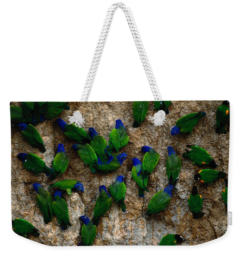 Blue Headed Parrot Weekender Tote Bag featuring the photograph Blue-headed And Barrabands Parrots by Art Wolfe