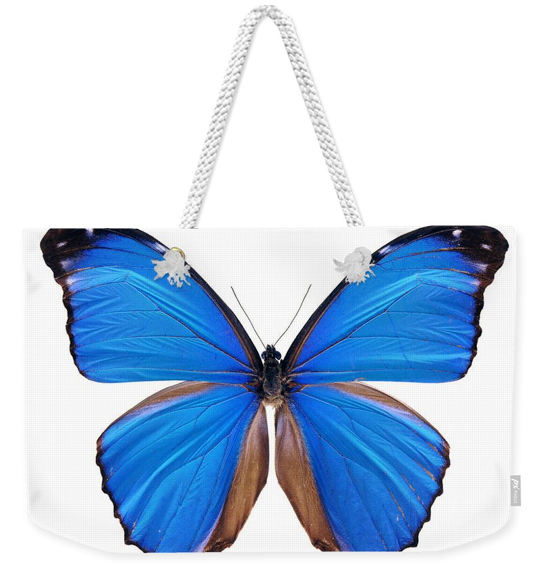 Amazon Rainforest Weekender Tote Bag featuring the photograph Blue Morpho Butterfly - Large by Phototalk